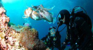 私人定制大西洋潜水